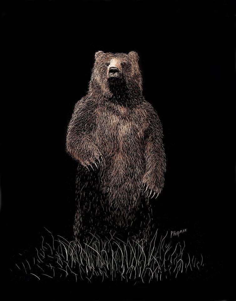Paul Hopman - Alaskan Brown Bear